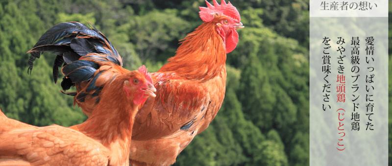 宮崎地頭鶏の地鶏ファーム